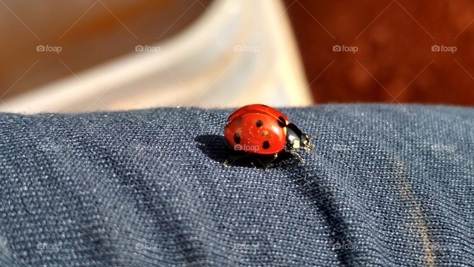 No Person, Wear, Textile, Fabric, Ladybug