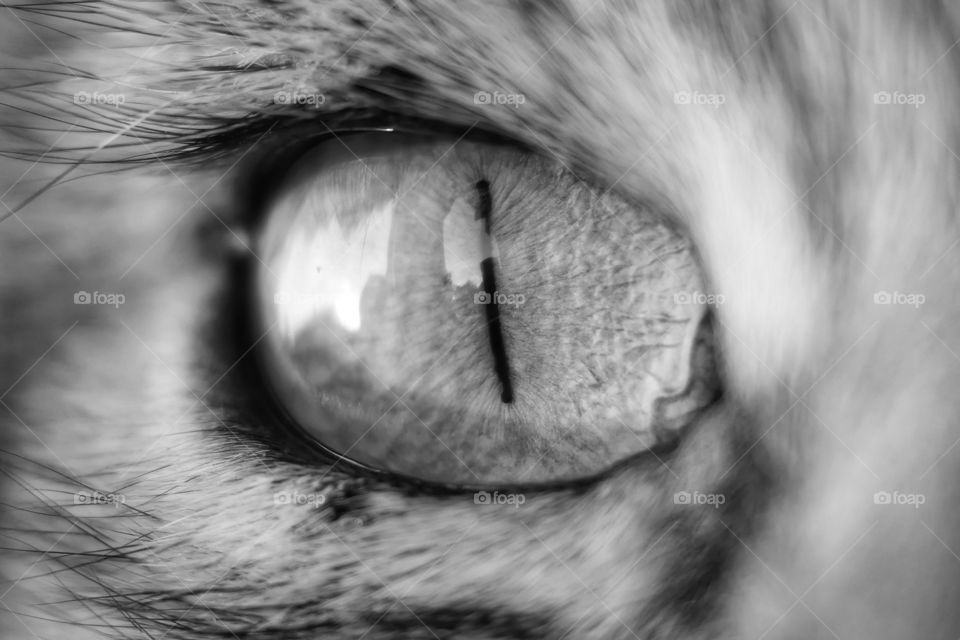 Eye of the tiger 😊 Close up of cat eye