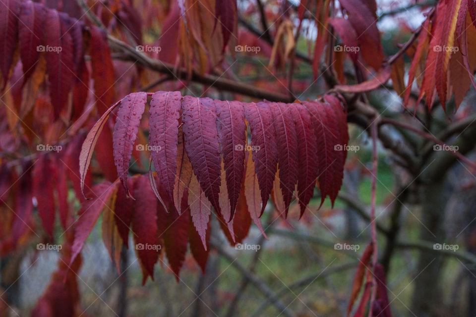 Red leaf. Romantic autumn leaves