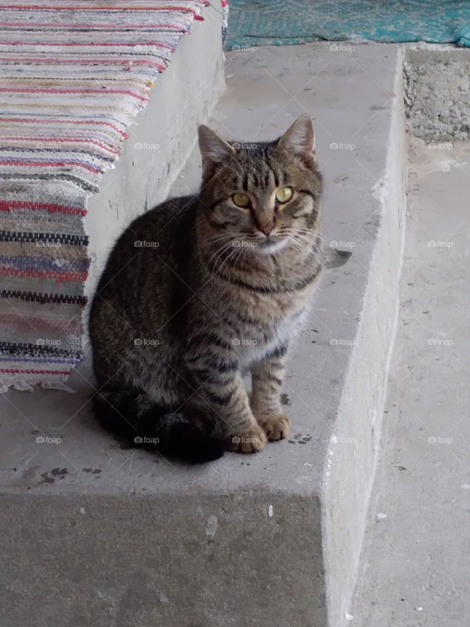 domestic cat sitting on stairs