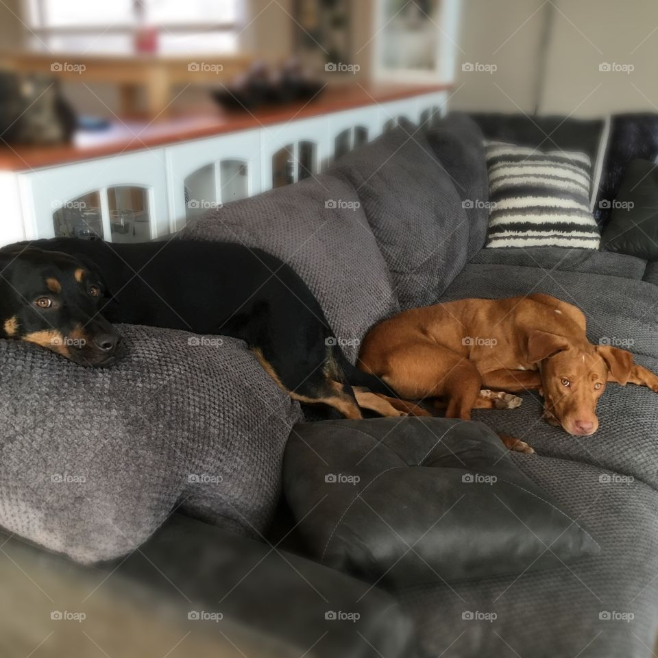 Dog, Pet, Mammal, Canine, Portrait