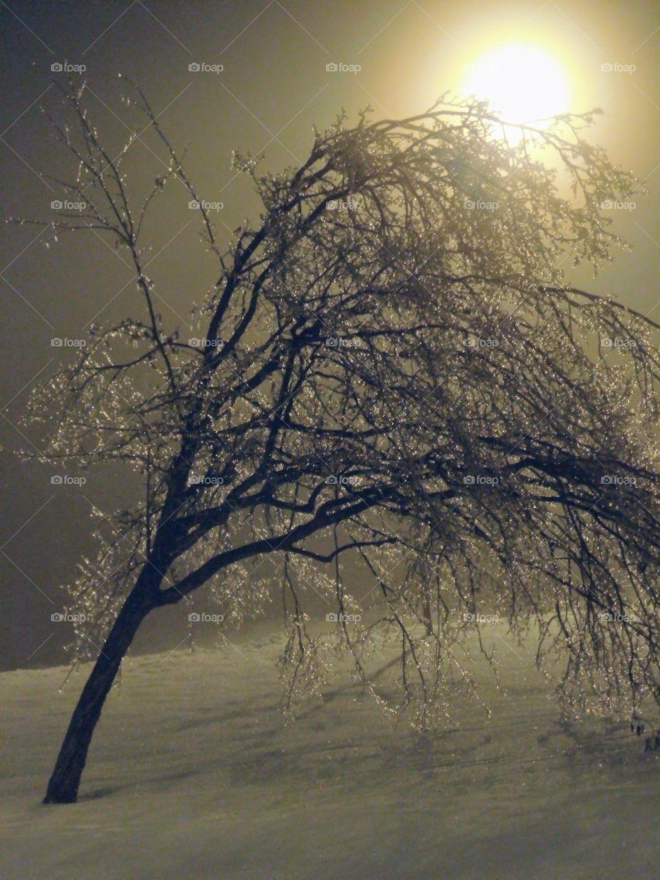 Froze tree leaning sideway
