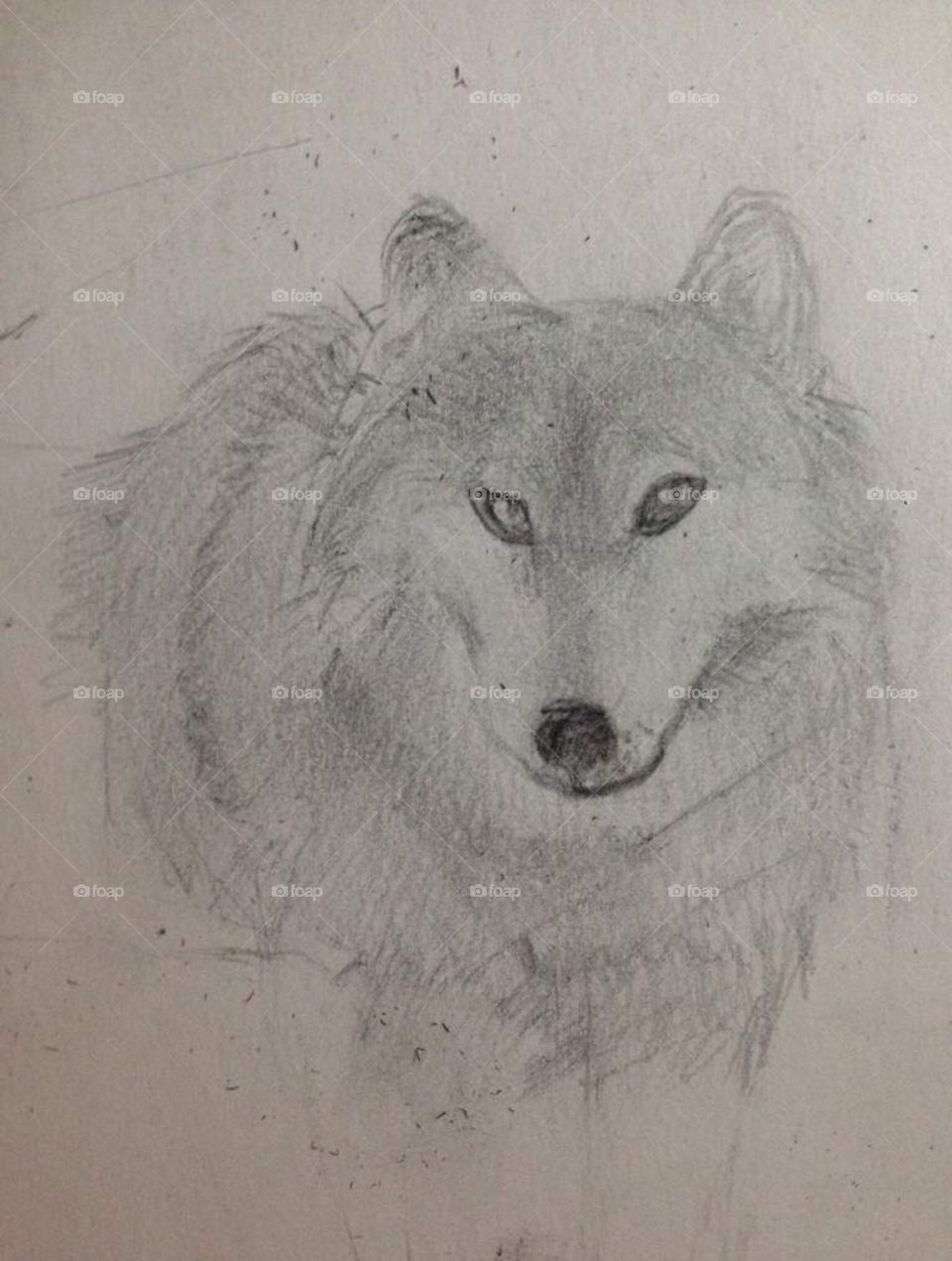A wolf portrait drawn in pencil on white sketch paper