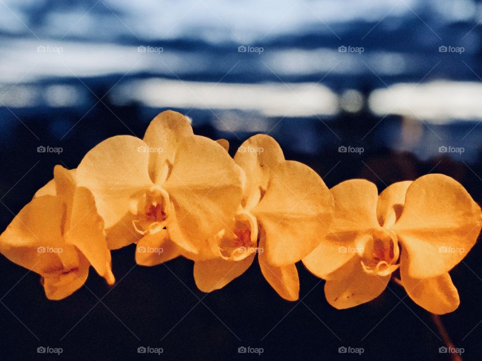 Beautiful Botanicals Exquisite Orchids! Perfect Canvas Art, Metal Art, Wall Art!
