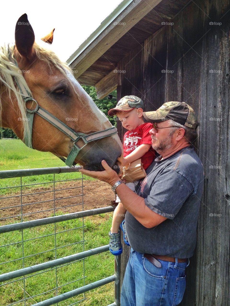 Feeding the horse at the farm
