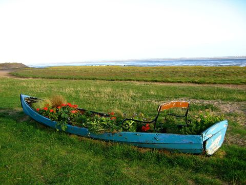 Flower plants on abandoned boat near lake