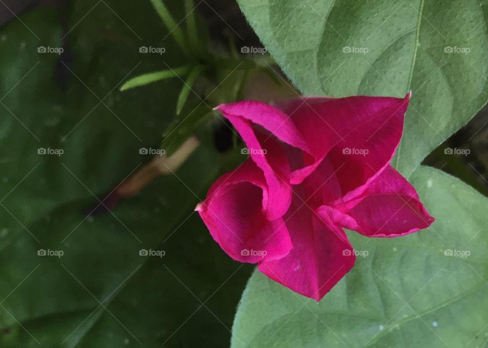 Leaf, Flora, Nature, Flower, No Person