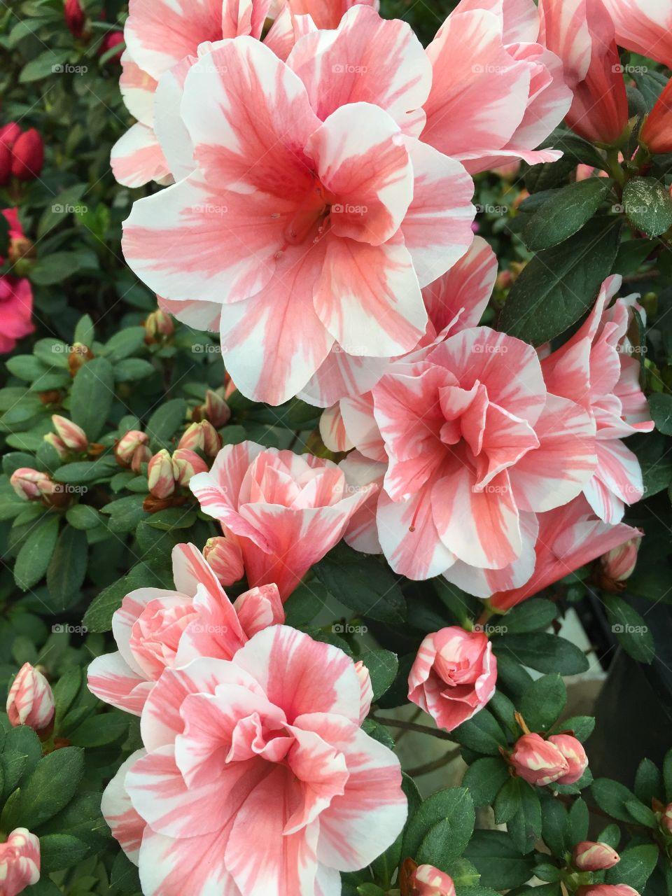 Beautiful bushed flower from the bush south korea.