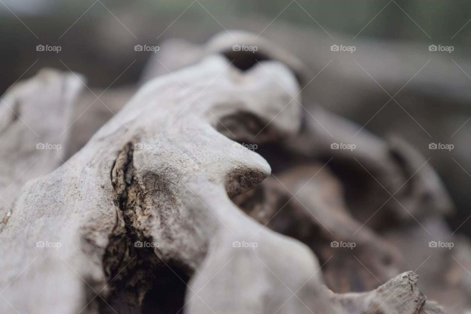 Perspective is everything in this world, upclose imagery of this broken log changes your perspective completely