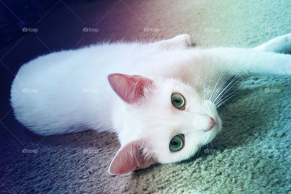 White cat with gorgeous green eyes