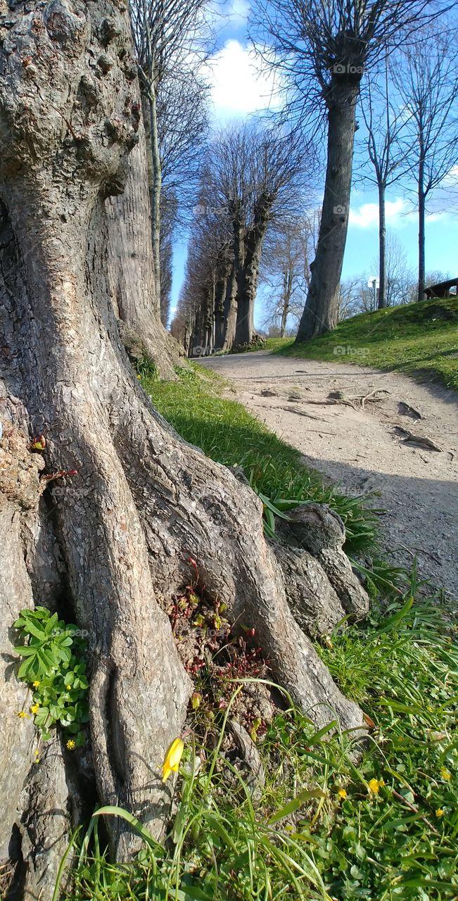 Baum Tree wurzeln weg natur grün Himmel blau sky Hoffnung Boden wood