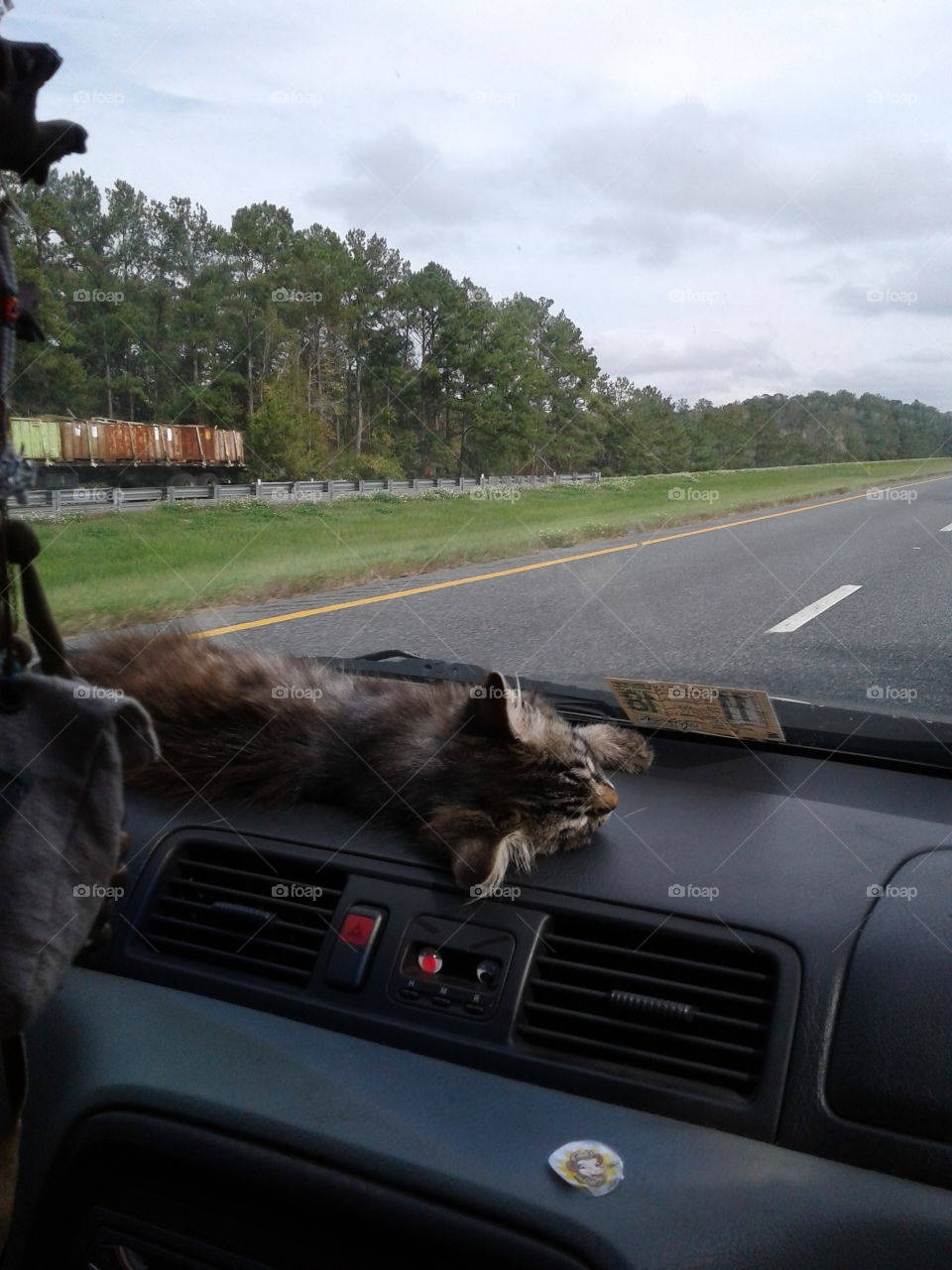 cat lounging on the dash of a few traveling kids car