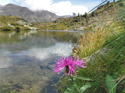 flower in the lake