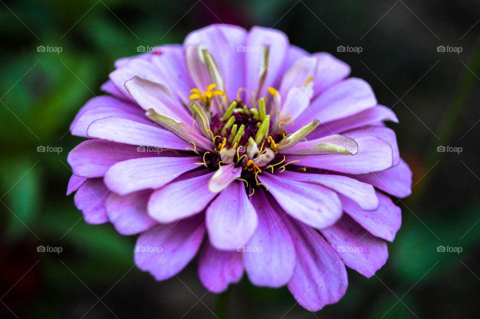 Lovely Closeup of Beautiful Flower
