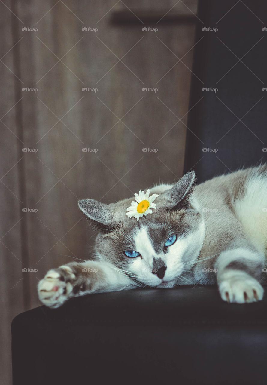 Cat's emotions