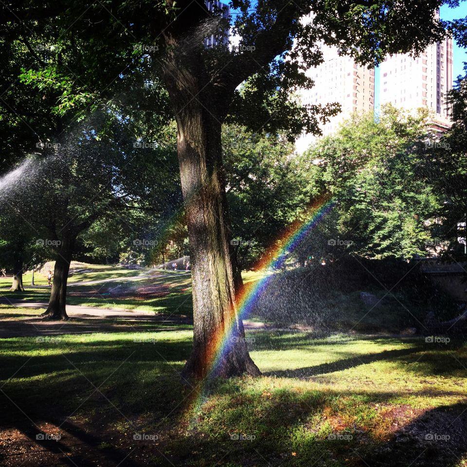 Sprinkler Rainbows