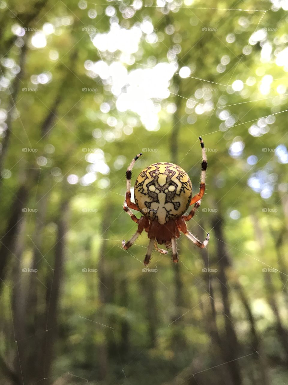 Spider waiting for its prey.