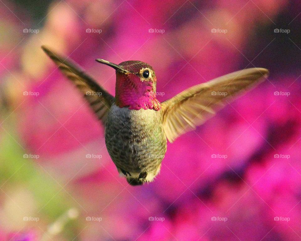 Hummingbird in mid-air