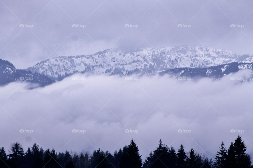 A misty, foggy shot of the snow covered Pacific Northwest mountains  purple in the waning winter daylight. A 'V' for Vicky cut in the tree line attracted me to this shot!