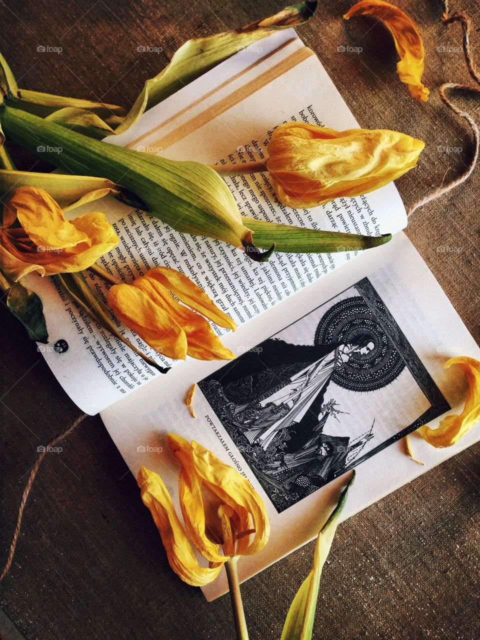 Tulips . Tulips on the book