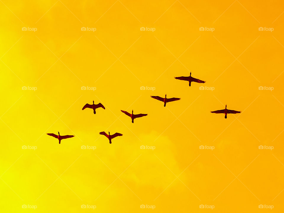A group of birds are returning home