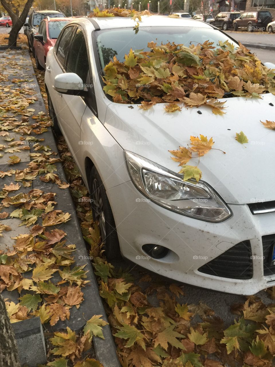 Autumn leaves on the car
