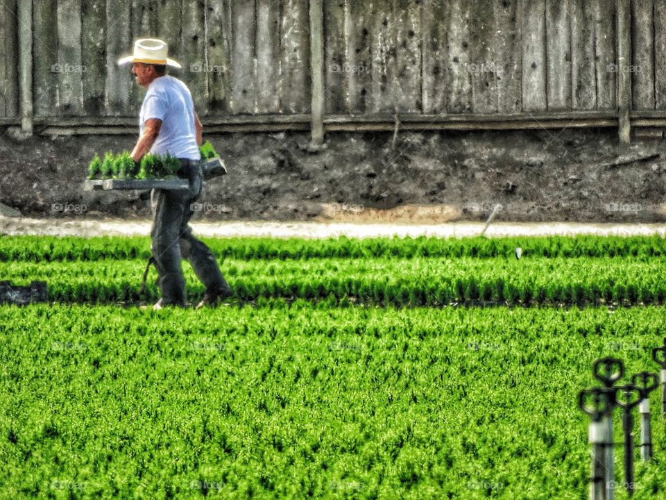 Migrant Farm Worker in Hot Sun
