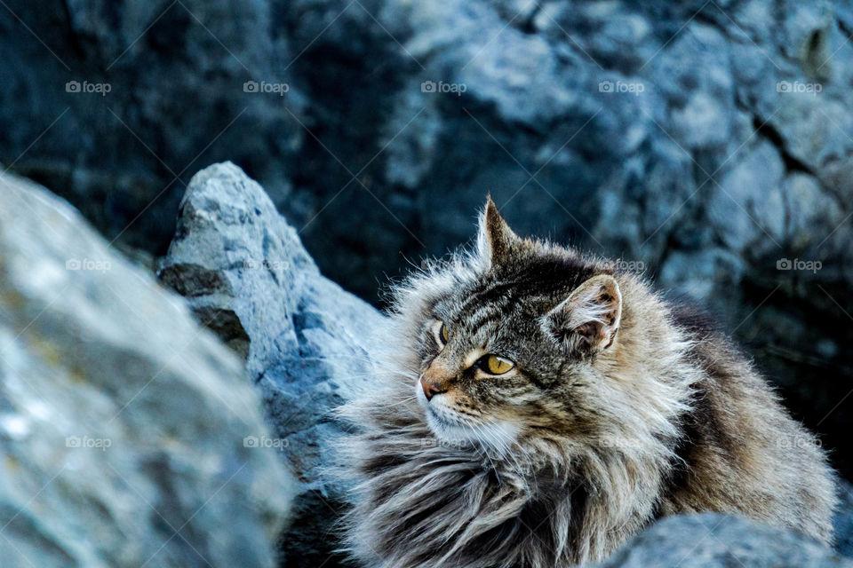 Intense Cat Majesticly Posing