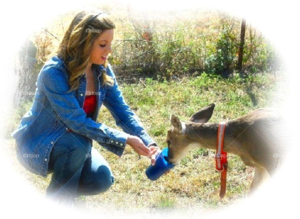 Feeding deer by hand
