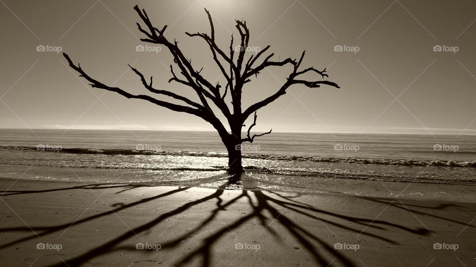 View of bare tree at beach