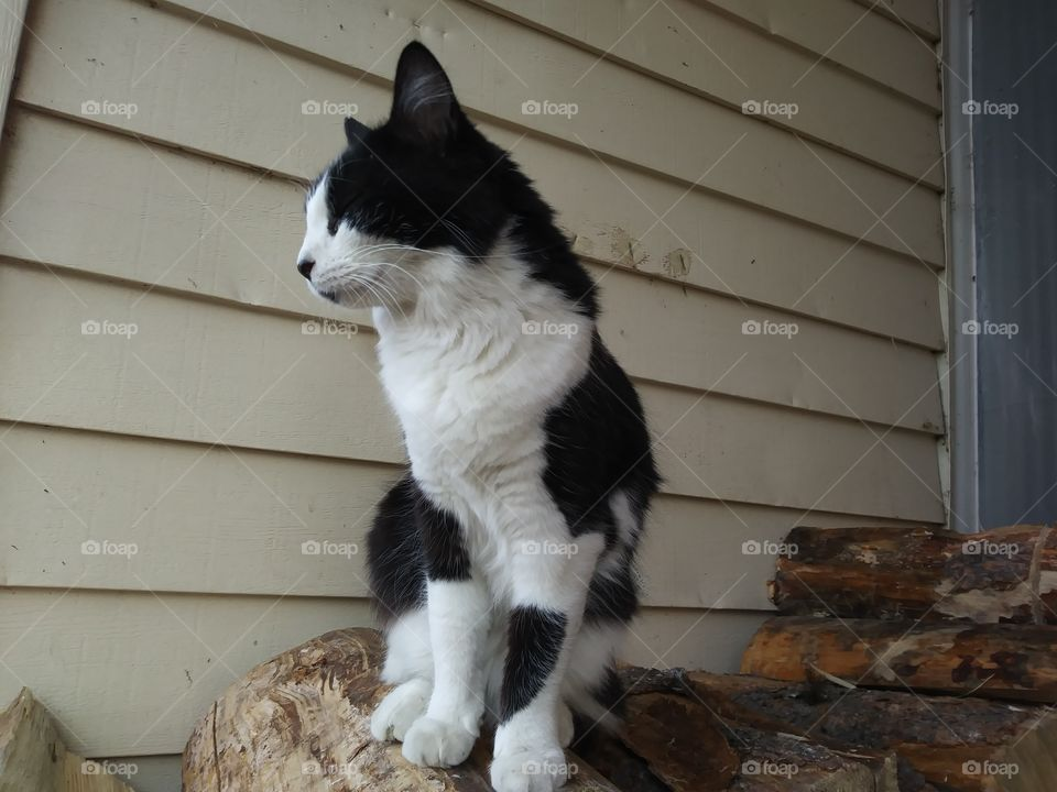 Black and white cat sitting on a woodpile 💖