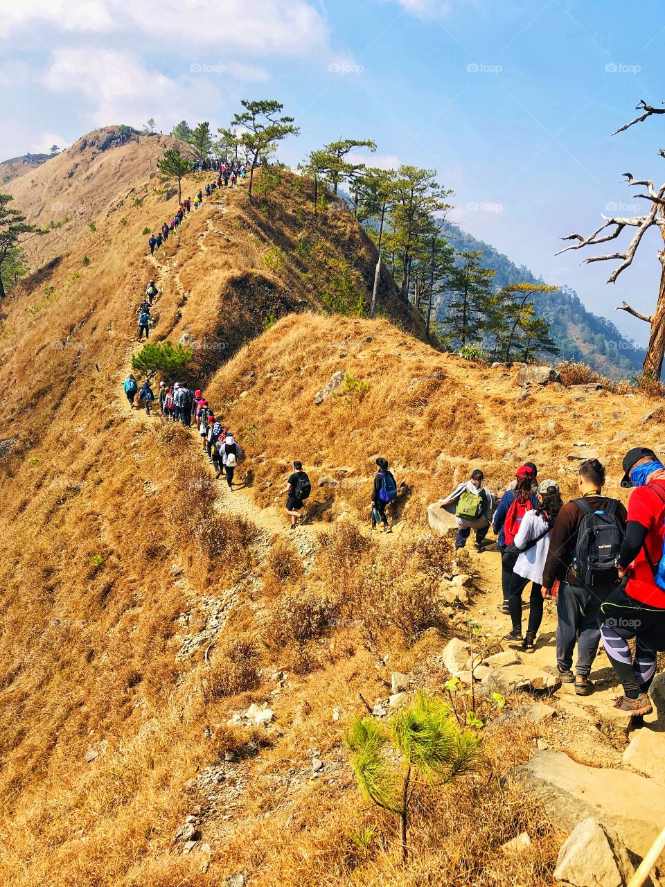 Mt. Ulap is a long hike compared to your usual one. You need more than just strength and stamina to climb up and go down, you need patience. Ulapshouldn't be that hard for experienced hikers and mountaineers. I survived Mt. Ulap! ⛰️💪 (1846 MASL)