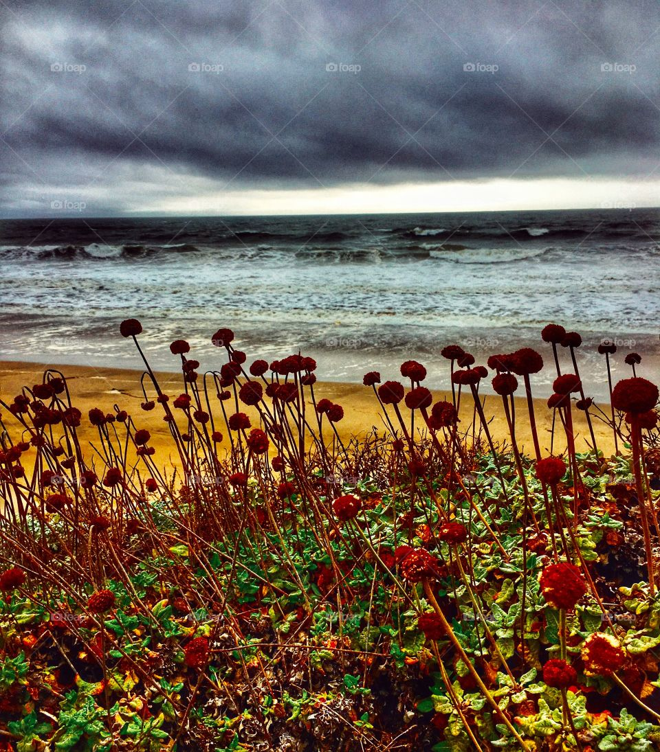 California beach with wildflowers in stormy weather