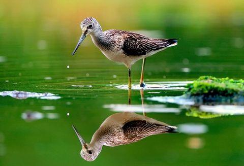 Bird reflection in water