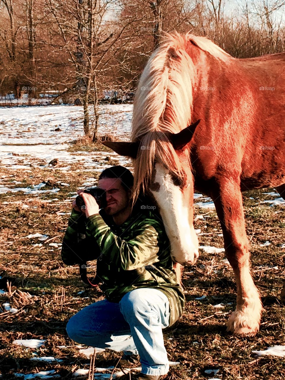Loving Clydesdale buddy helping out on a photo shoot