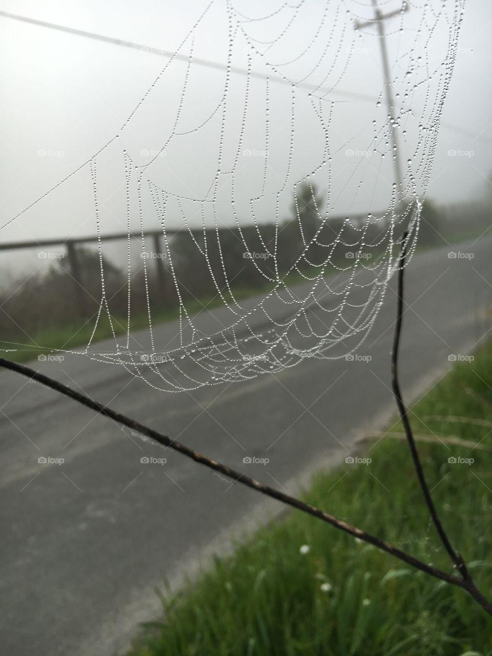 Spiderweb morning dew