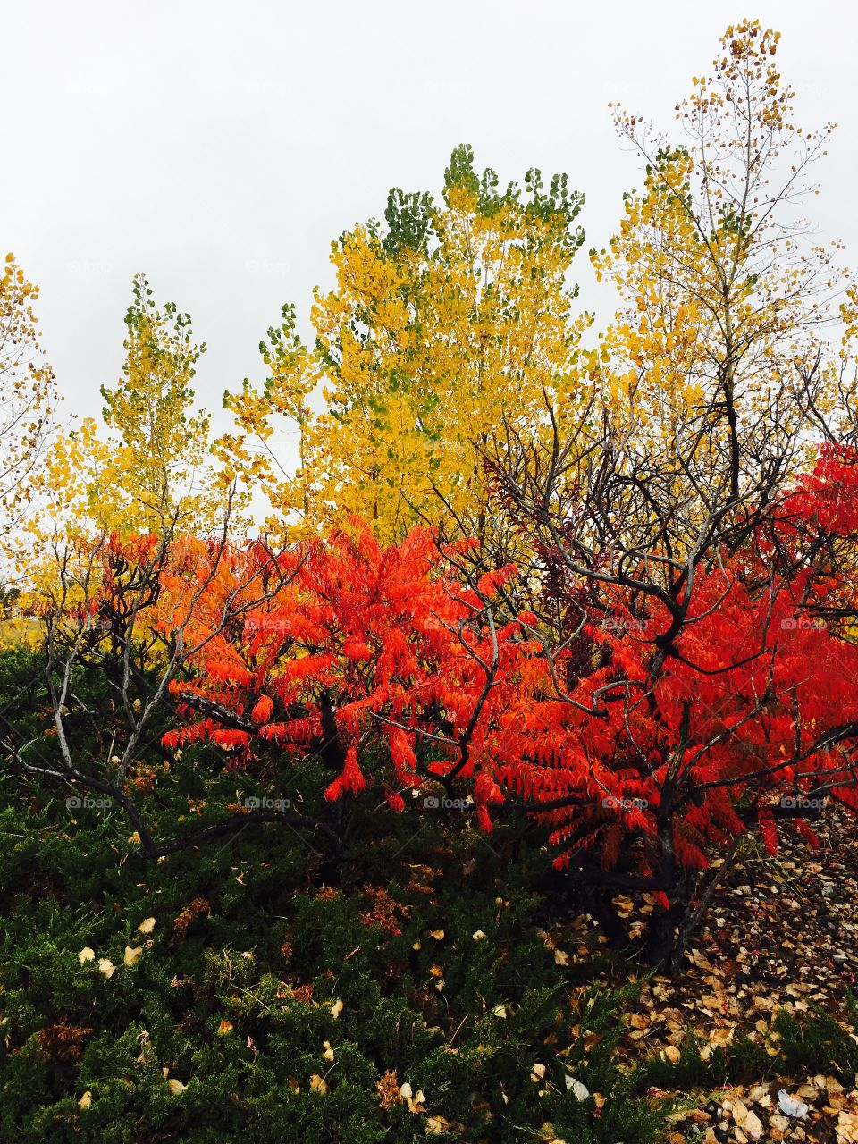 Scenic view of colorful autumn trees