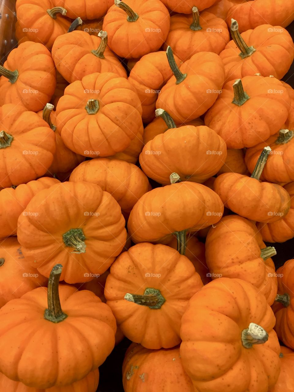 The orange color stories. Orange, orange pumpkins. Autumn is when the pumpkin harvest comes in, so it's one of the symbolic vegetables of that time of year. Pumpkins have become symbols of prosperity, growth and abundance.
