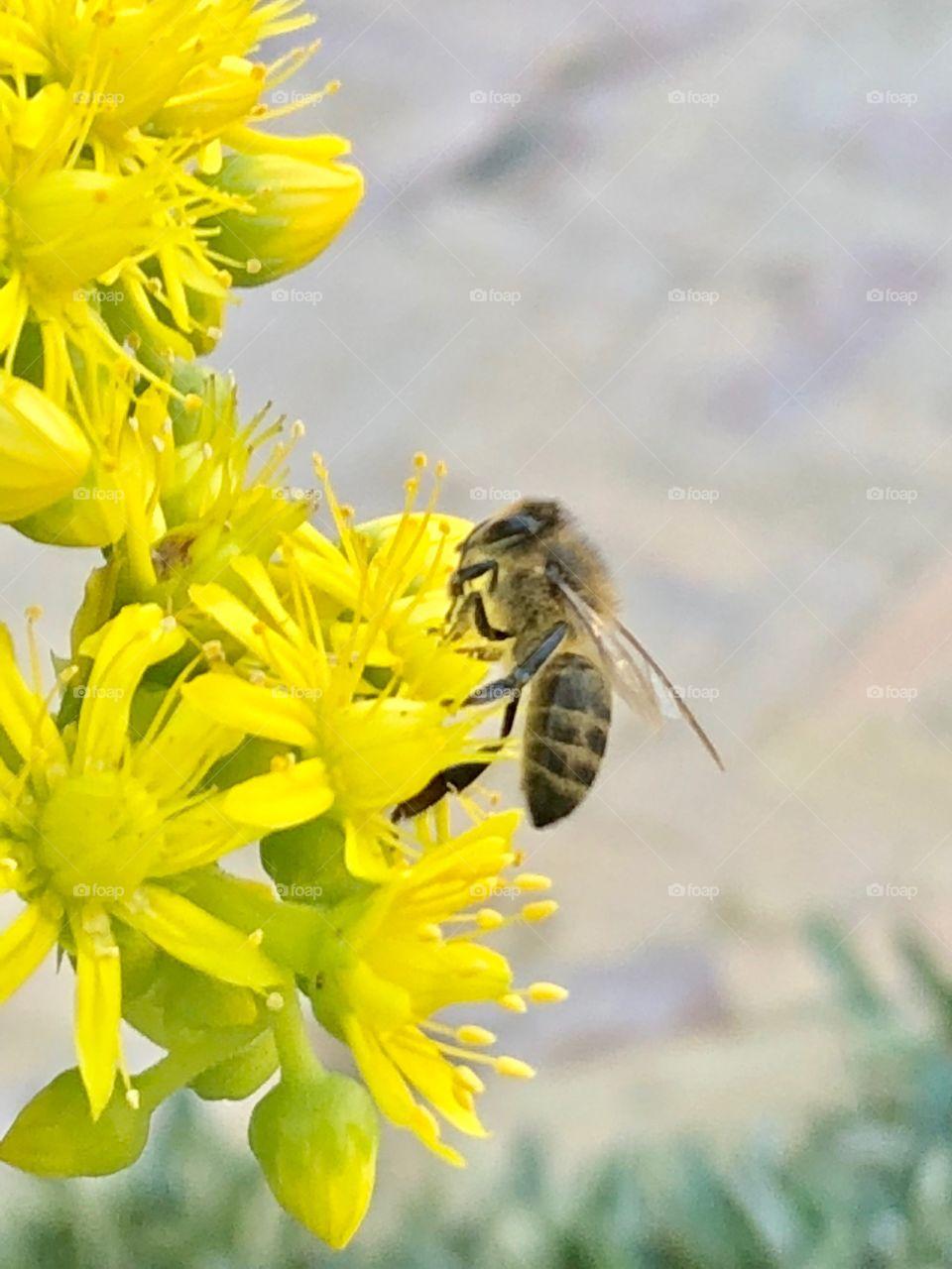 Honey by bee