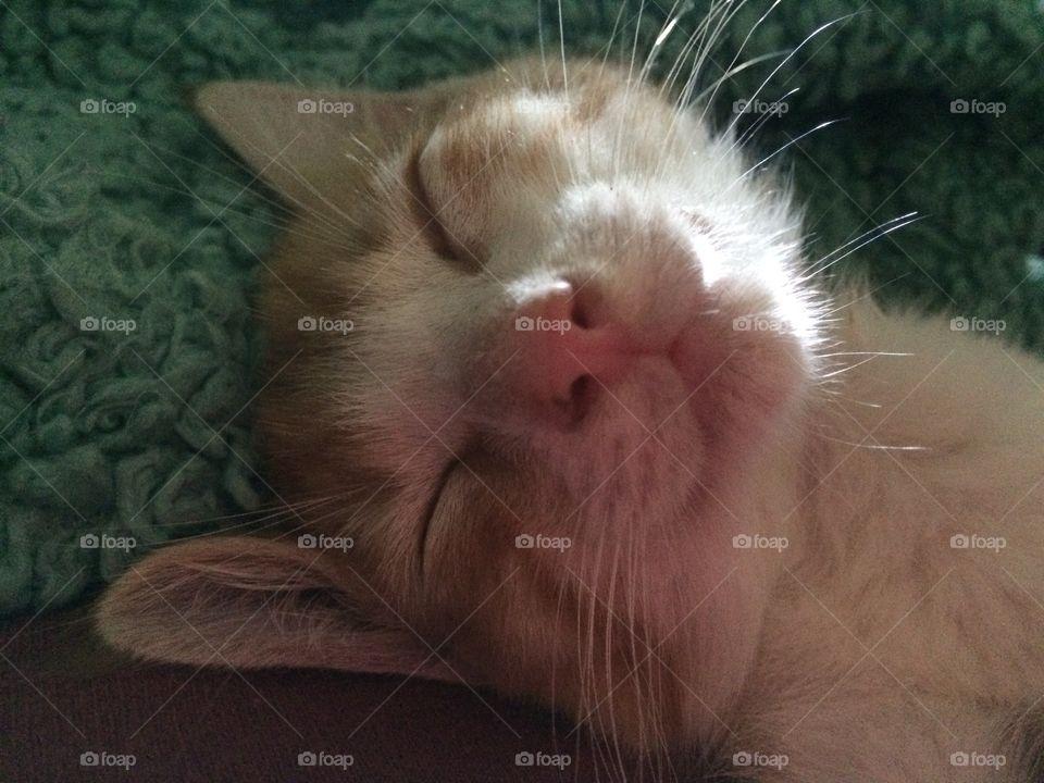 Atreyu smiling while he sleeps