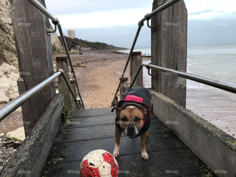 Football dog Miss pixie 🐕