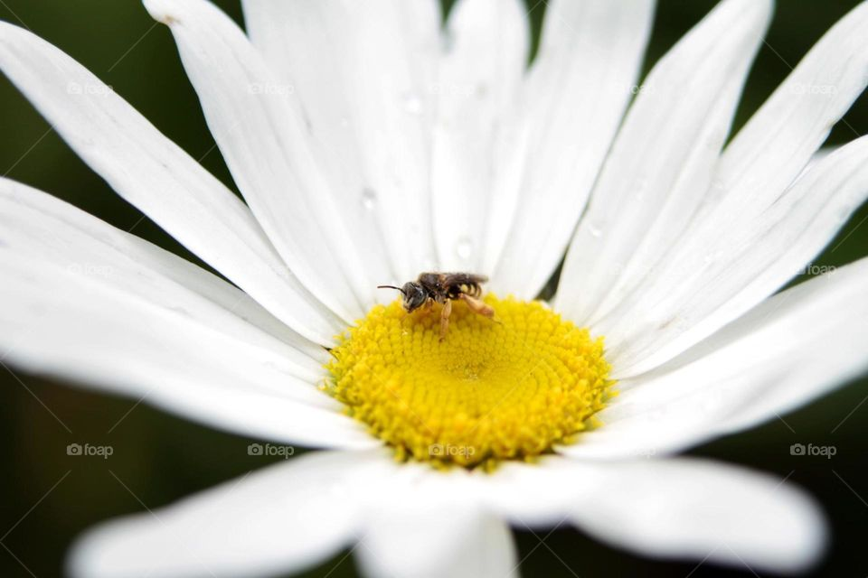 abelha comendo mel