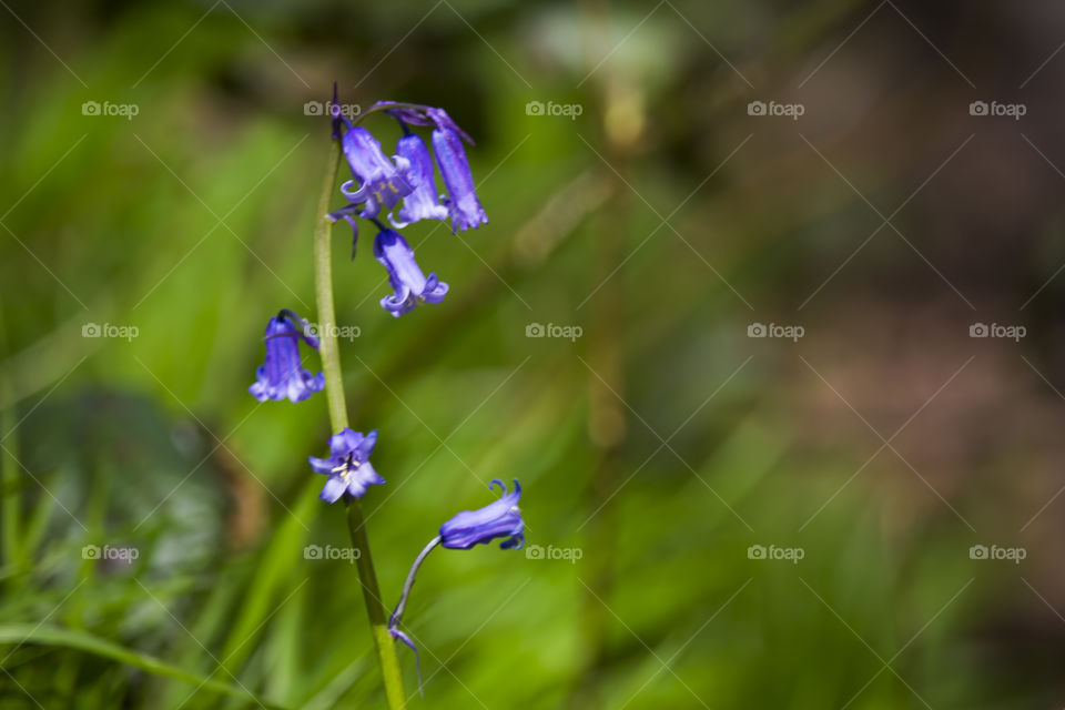 Purple flower handing on plant