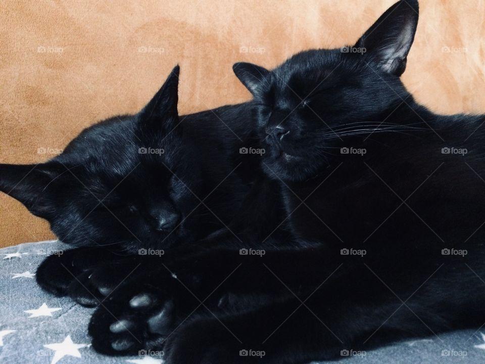 Sleeping buddies