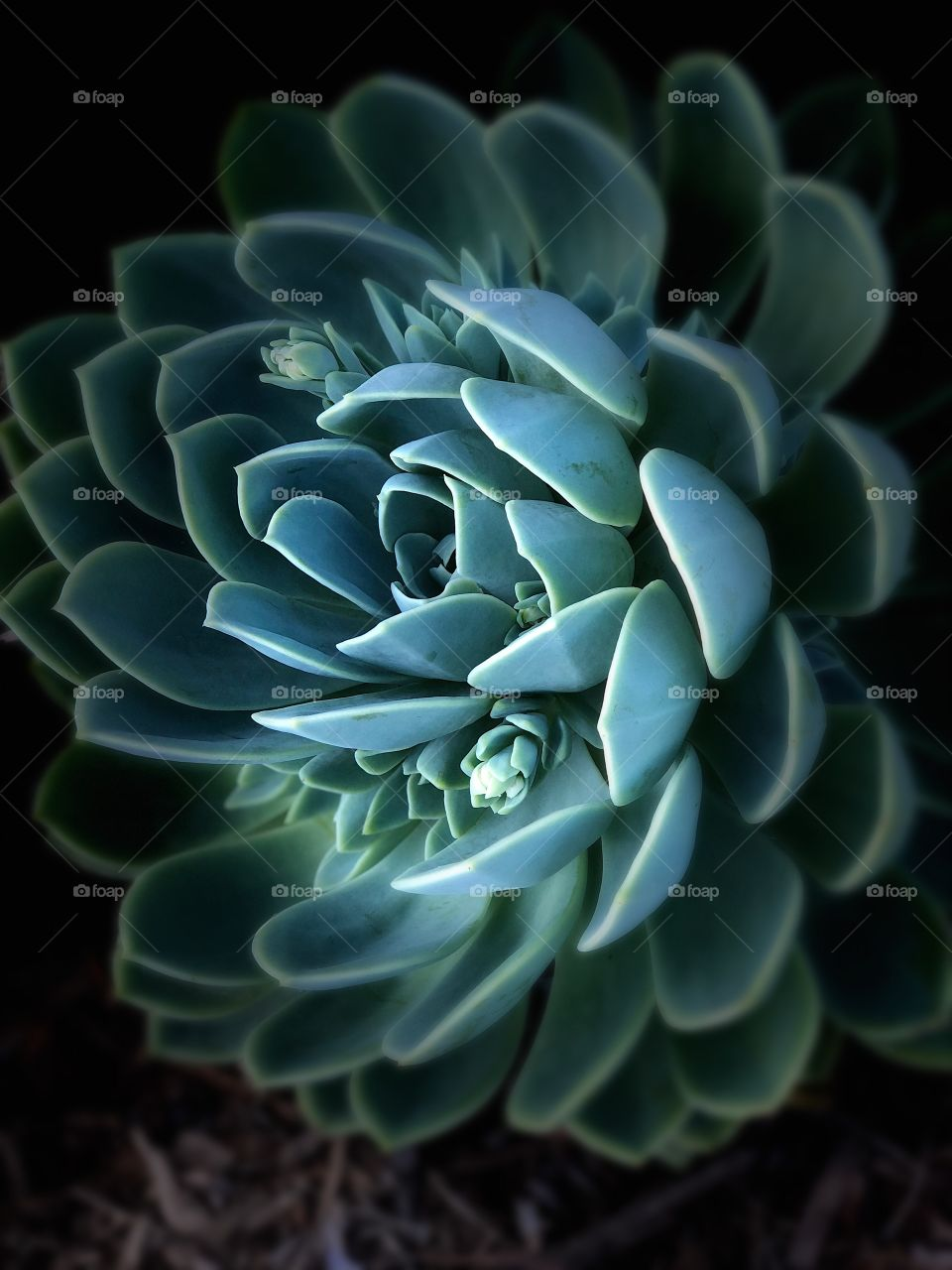 Beautiful and Stunning Succulent Fine Art! Perfect Canvas , Metal and Wall Art.