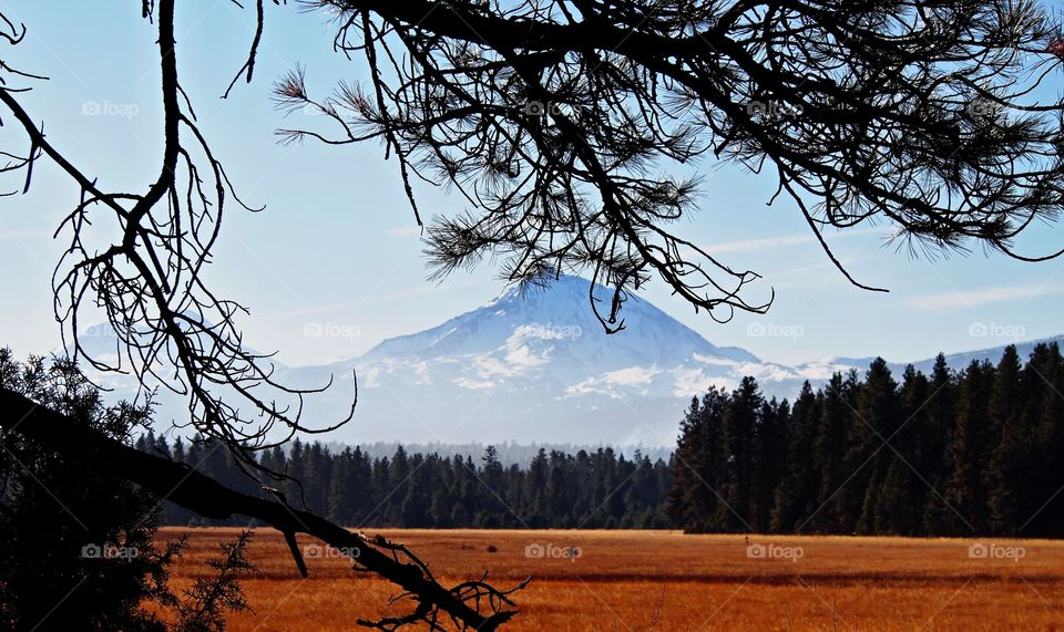 The North Sister in Central Oregon's Cascade Mountain Range framed by pine tree branches on a sunny winter afternoon.