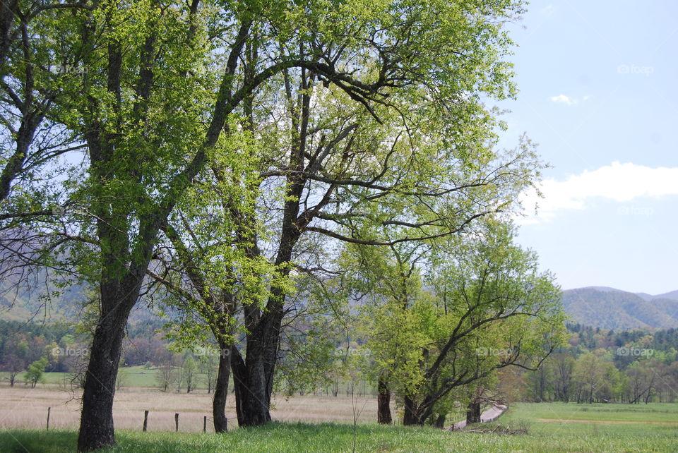 Tree, Landscape, Nature, Wood, Rural