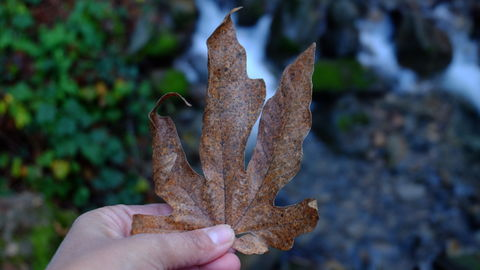 Holding dry leaf in front of a water fall
