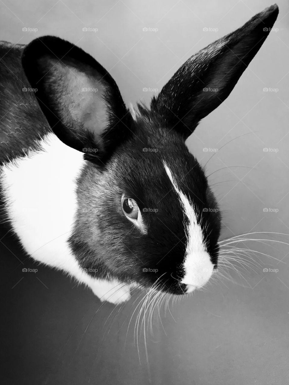 Close-up of rabbit