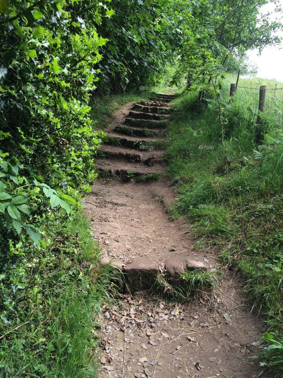 Steps. Well worn steps